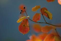 2011-9_11-Herbst-278-RoHartri-xxx