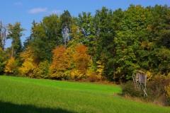 2011-9_11-Herbst-279-land-xxx