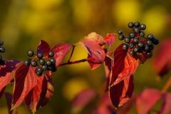 2011-9_11-Herbst-489-RoHartrieg-xxx